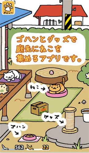 猫咪后院(4)