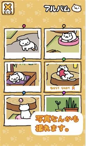 猫咪后院(3)