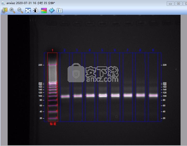 imagelab(凝胶成像系统软件)